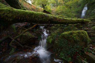Selva del Gorbea